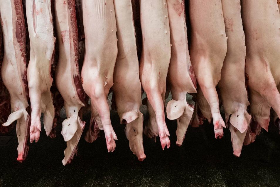 Schweine in einem Schlachthof in Neuruppin sollen unsachgemäß betäubt und brutal misshandelt worden sein.