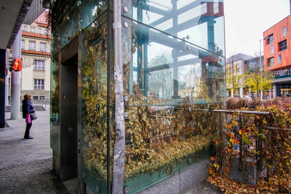 Sieht eher aus wie ein Gewächshaus: Der Aufzug am Kornmarktcenter ist zugewachsen und schon lange außer Betrieb.