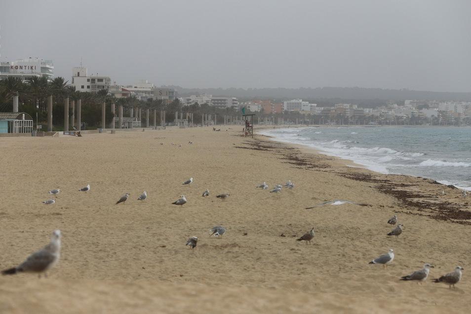 Vögel und Möwen am Strand von Arenal. Von Herbstferien ist auf Mallorca kaum etwas zu sehen. Die meisten Hotels sind zu, der Strand ist leer.