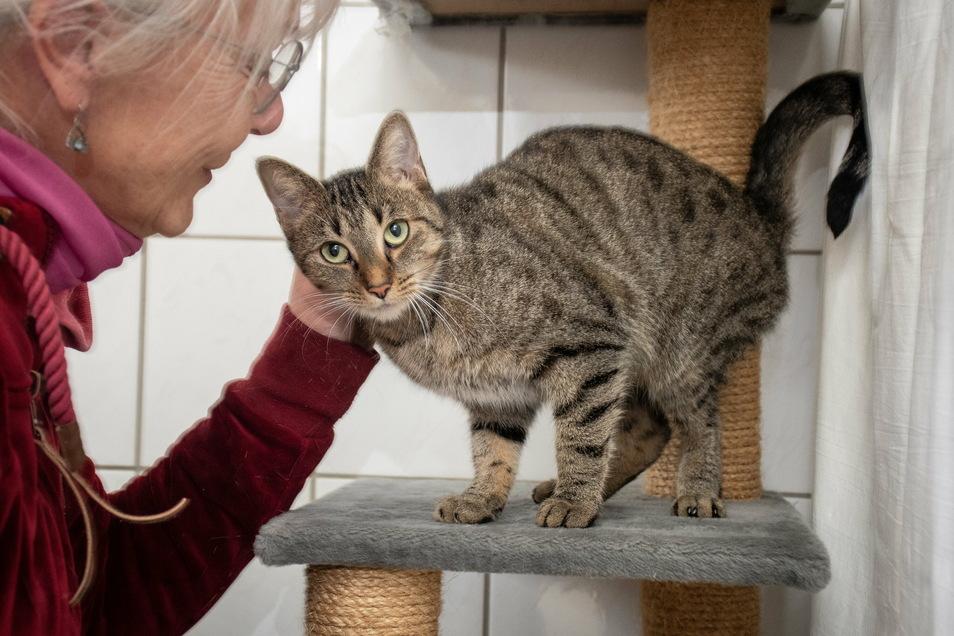 Carmen Posner vom Ostrauer Tierheim mit einer der zwölf Katzen, die sicher gestellt worden sind.