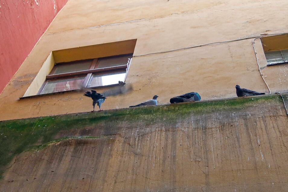 Problem Nummer 5: Taubenkot. Immer mehr Tauben nisten in leerstehenden Häusern in der Innenstadt. So wie hier im Justgässchen werden sie zunehmend zur Plage.