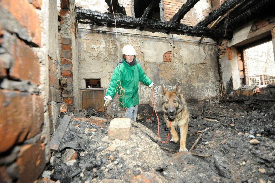 Brandermittler mit Spürhund im Einsatz in der Waldaer Brandruine.