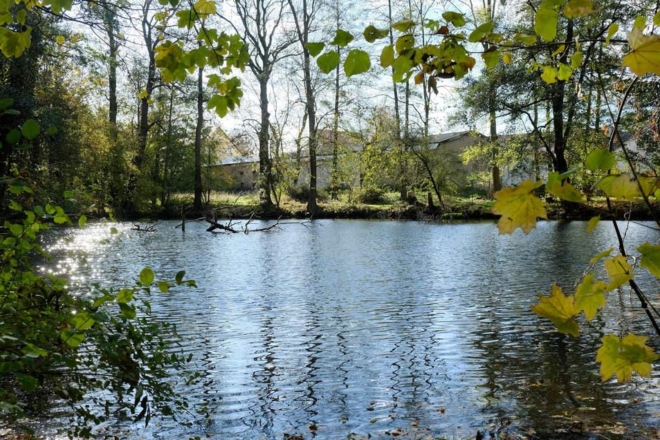 Die Idylle trügt. Dieser Teich im Park Niederjahna wurde zwar entschlammt, viel mehr wurde aber bisher noch nicht fertig.