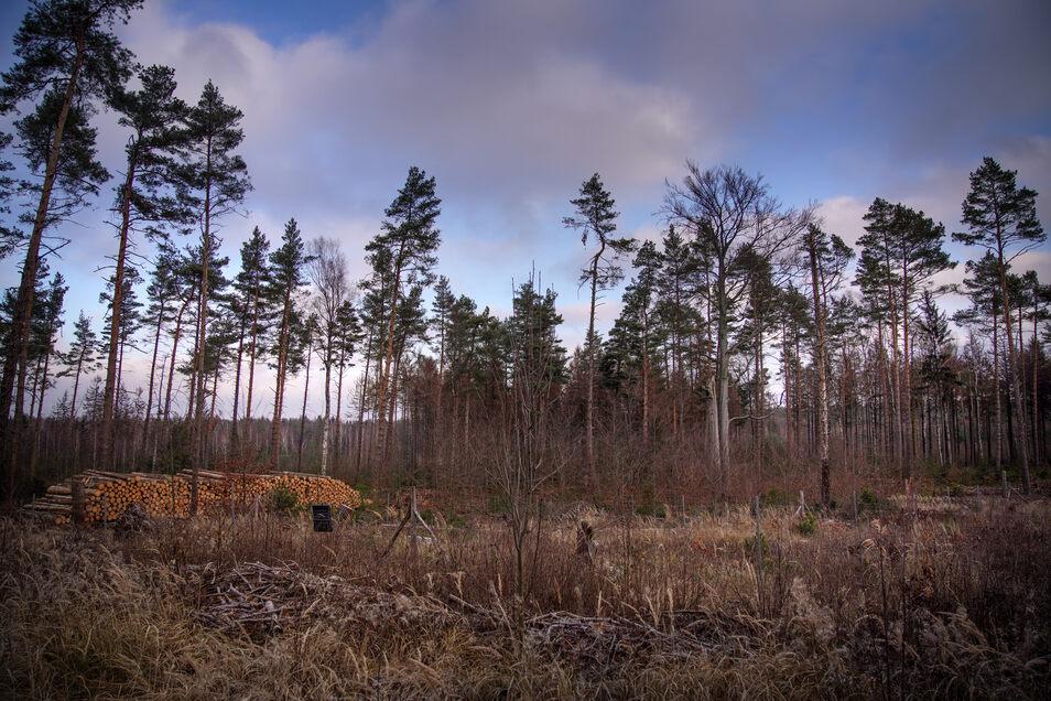 In der Dresdner Heide hat es am Montag gebrannt. Die Ursache ist noch unklar.