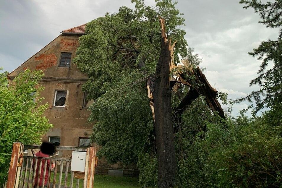 In Hirschfelde krachte ein großer Baum in der Zittauer Straße auf ein Wohnhaus.