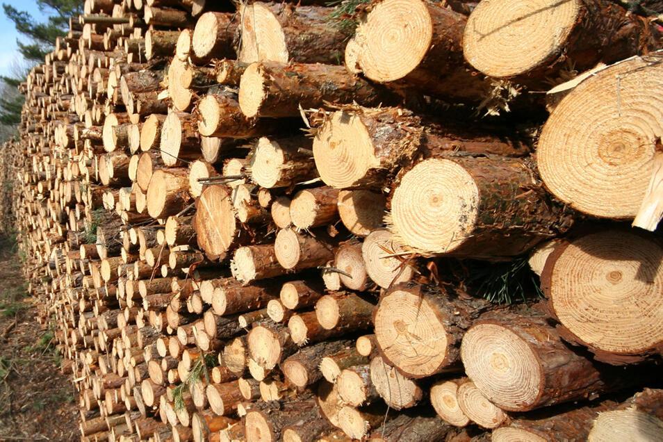 Mit Holzeinschlag halten sich die Kommunen im Raum Hoyerswerda seit einiger Zeit zurück, da der Rohholzpreis im Keller ist. Anders sieht es allerdings in Waldgebieten aus, in denen der Borkenkäfer zum Handeln zwingt.