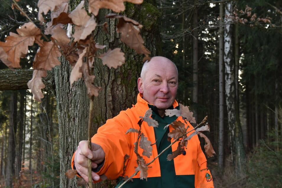 """""""Der Anfang ist gemacht."""" Mario Prielipp, Leiter der Staatswälder im Forstbezirk Neustadt, will, dass viel mehr Eichen wachsen."""
