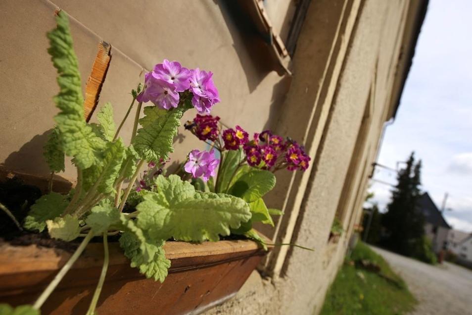 Seit wenigen Tagen schmücken diese farbenfrohen Blumen die Fenster des ehemaligen Gasthofes. Sie bilden einen traurigen Kontrast zu dem seit Jahren zerfallenden Haus.
