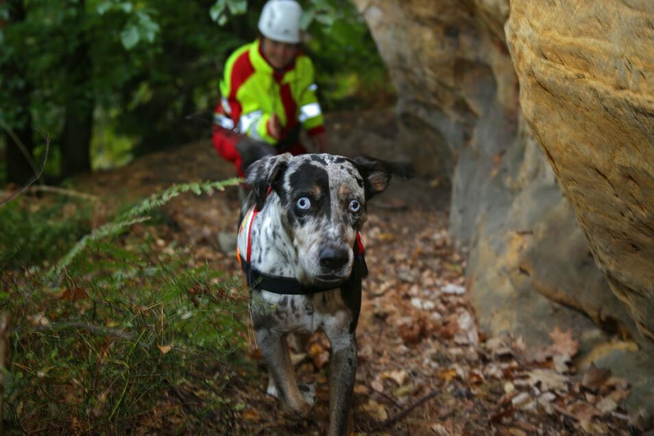 Rettungshunde müssen auch üben. In schwierigem Gelände zeigten die Schnüffelnasen ihr Können.