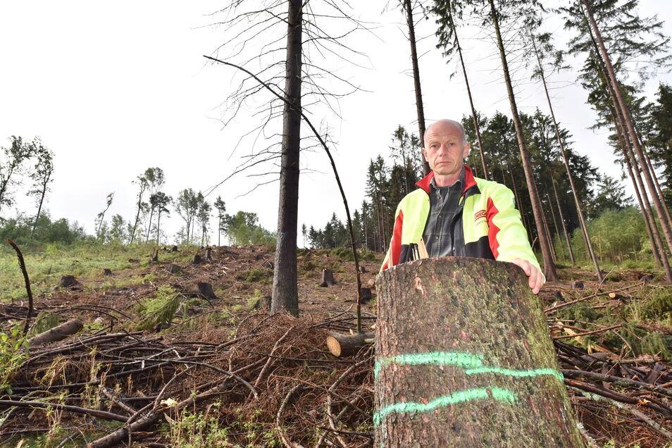 Martin Mixsas Wald bei Kreischa ist von Käfern und Dürre ausgedünnt. Auch wenn besser gezahlt wird: Ohne Not will er jetzt keine Bäume fällen.