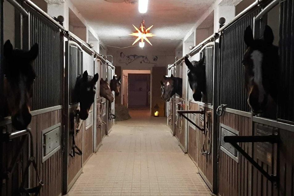 Stallweihnacht im Heuscheuner Reit- und Pensionsstall in Großhennersdorf. Die Pferde warten dieses Jahr auch auf eine Bescherung.
