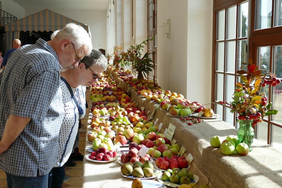 Die Obstschau fand großen Anklang. Viele Besucher interessierten sich für die unterschiedlichen Apfelsorten.