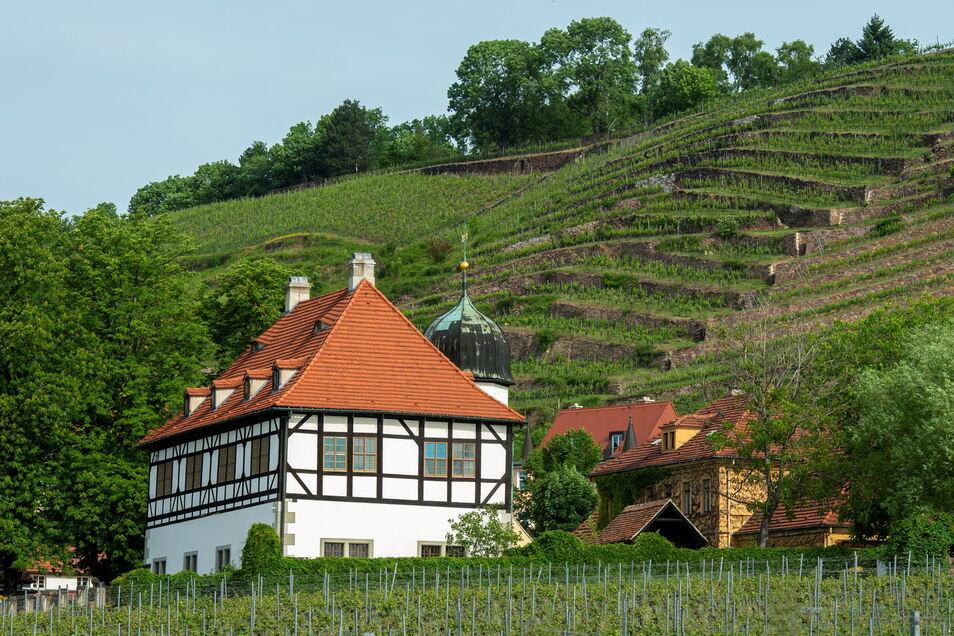 Das Radebeuler Stadtweingut unterhalb der Spitzhaustreppe.