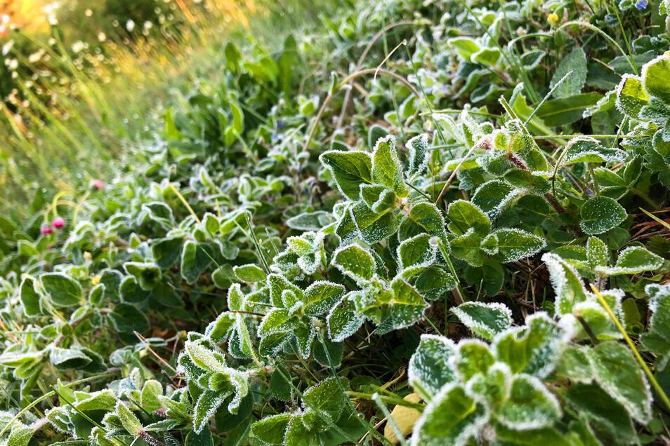 Nicht alle Pflanzen überleben eine frostige Nacht. Deswegen sollte man sie besser abdecken.