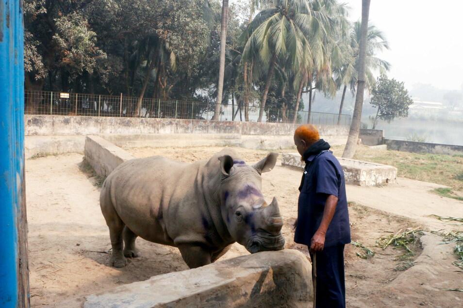 Farid Miah, Pfleger der einsamen Nashorn-Dame Kanchi, versucht das Tier im Nationalzoo zum Fressen zu animieren.