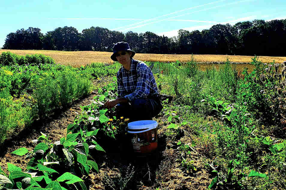 Susann Jande aus Oberottendorf hat reichlich Gemüse angebaut. Nicht für sich, sondern für die Mitglieder ihres Landwirtschaftsprojektes.