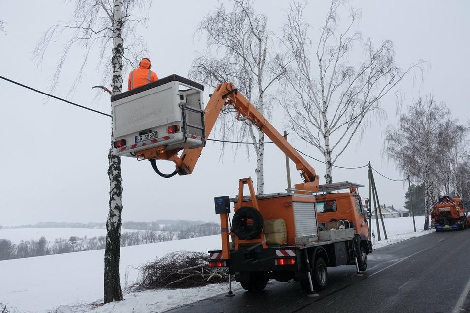 Ziemlich gerupft sehen die Birken an der wegen Schneebruch gesperrten Kreisstraße nach Stockhausen aus. Mitarbeiter der Straßenmeisterei Döbeln haben beschädigte Äste zurückgeschnitten. Seit Freitagnachmittag ist die Straße wieder frei.