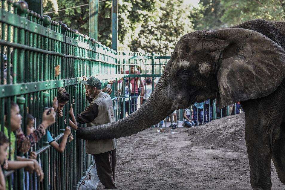 Ein Elefant in einem Zoo in Kairo.