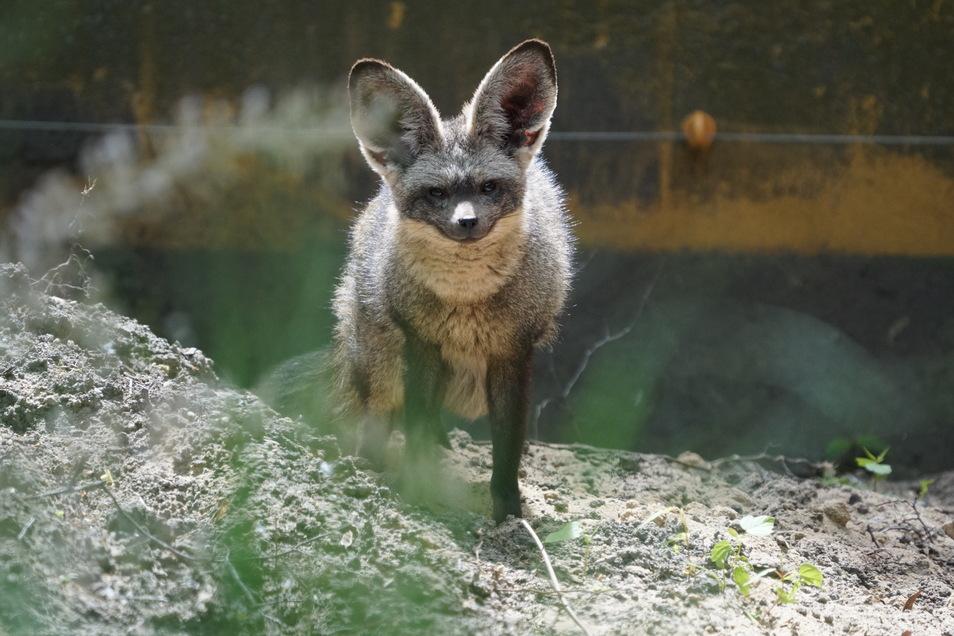 Noch braucht man für ein Foto der Zoo-Neulinge ein gutes Teleobjektiv.