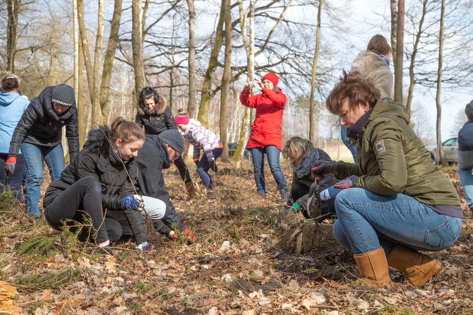 Mitarbeiter des Nieskyer Hospiz und ihre Familien pflanzen auf einem Waldstück bei Daubitz Bäume. Sie sollen an die im vergangenen Jahr verstorbenen Hospizgäste erinnern.