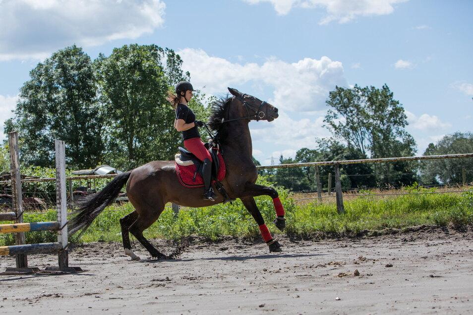 Die Wahrnehmung von Pferden ist zwar fein, aber anders als unsere - das ist die Ursache vieler Missverständnisse.