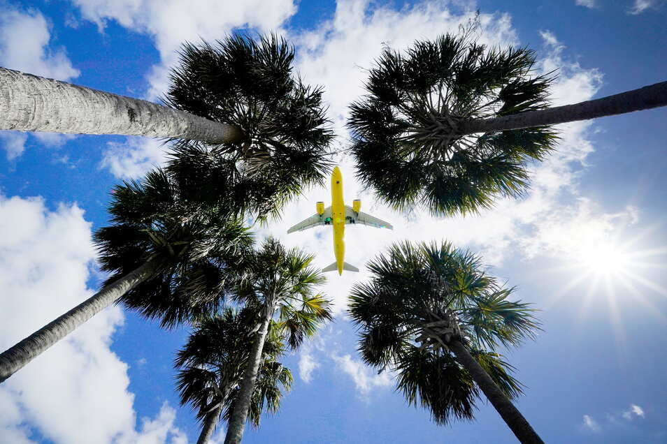 Ein Passagierflugzeug landet am Flughafen Tampa im US-Bundesstaat Florida und ist dabei vom Boden aus über den Wipfeln von Palmen zu sehen.
