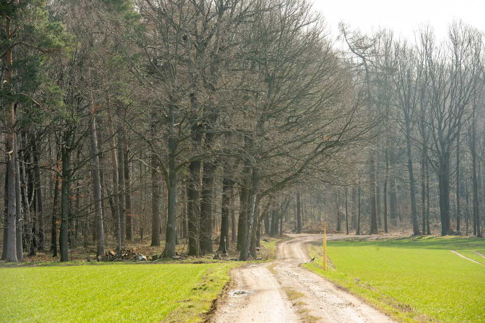 In den Wäldern wird gegen den Borkenkäfer gekämpft. Leider hinterlässt das auch auf den Waldwegen seine Spuren.