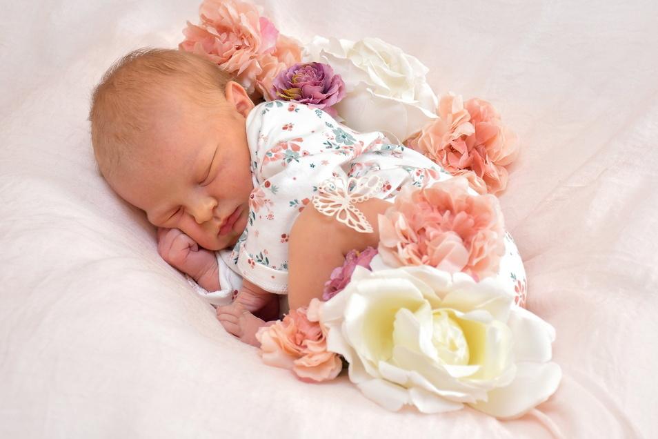 Hailey Joline, geboren am 22. Januar, Geburtsort: Freital, Gewicht: 3.710 Gramm, Größe: 52 Zentimeter, Eltern: Jasmin Ziegler und Oliver Muller, Wohnort: Freital