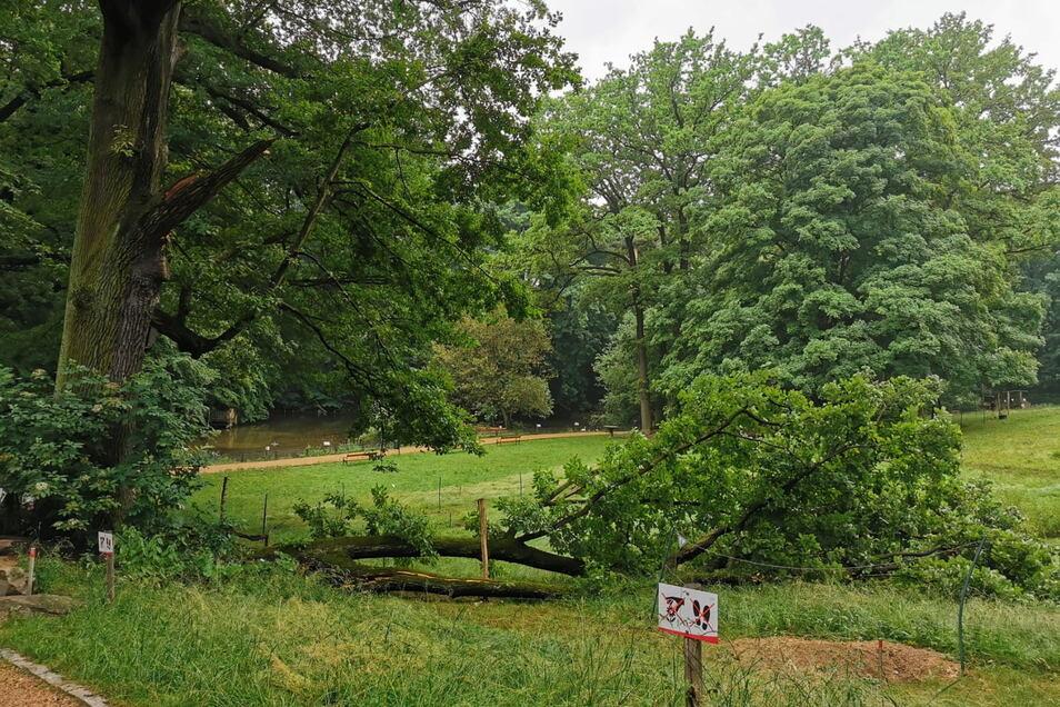 Das hätte auch anders enden können: Ein Ast brach über Nacht ab und zerstörte einen Elektrozaun im Tierpark.