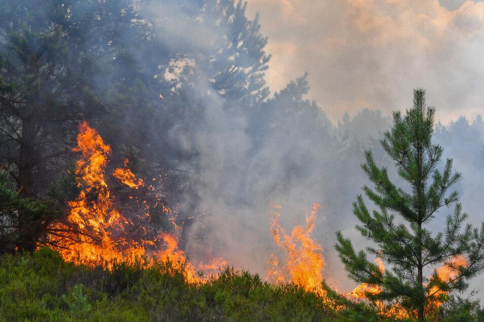 Wald- und Heideflächen brennen auf einem ehemaligen Truppenübungsplatz bei Lieberose in Südbrandenburg.