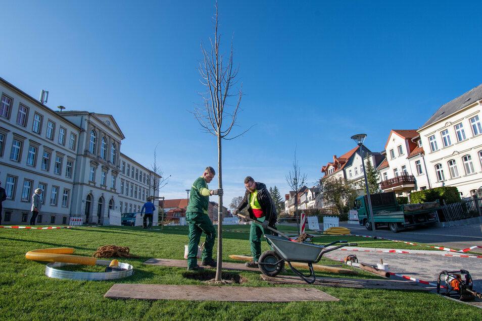 Mit dem Bepflanzen geht die Neugestaltung des Leisniger Lindenplatzes ihrem Ende entgegen. Obwohl dort eine Million Euro investiert worden sind, wird es keine feierliche Übergabe geben – coronabedingt.