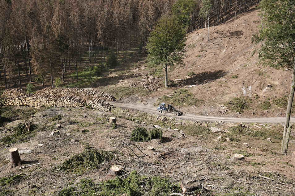 Zwischen dem Grenzort Hrensko und Mezni Louka musste schon großflächig gerodet werden.