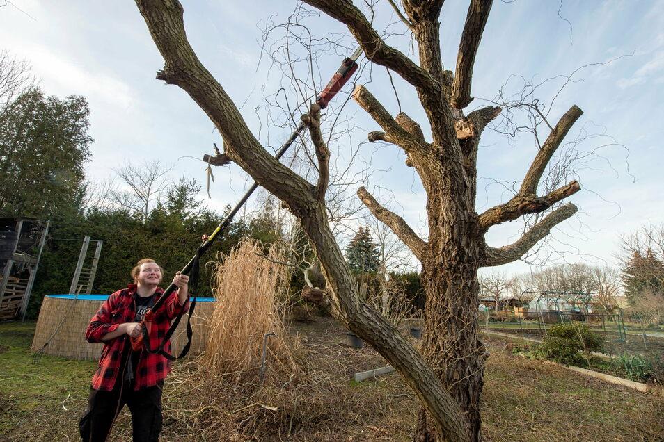 Für Erdarbeiten war der Boden noch zu gefroren. Hannes Recknagel hat im Coswiger Kleingarten seiner Eltern stattdessen Hecken und Äste abgeschnitten.