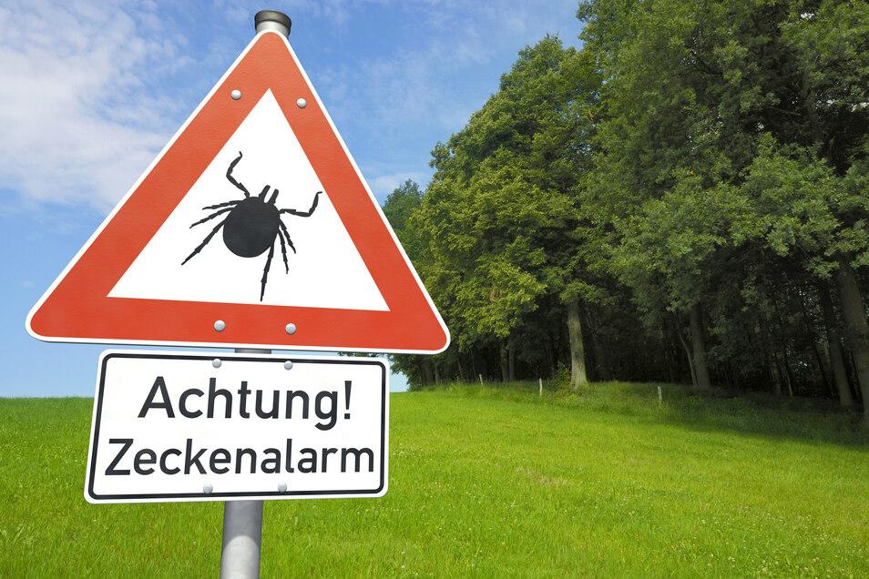 Beim Aufenthalt im Grünen: Zeckenschutz nicht vergessen.