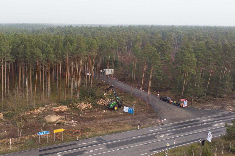 Der US-Elektroautobauer Tesla lässt für sein neues Werk im brandenburgischen Grünheide den Wald roden. Ein Gerichtsurteil hat das nun vorläufig gestoppt.