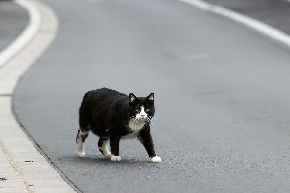 Eine oder mehrere Katzen können sich jetzt über viel frisches Katzenstreu freuen. Die Besitzer haben es allerdings nicht rechtmäßig erworben.