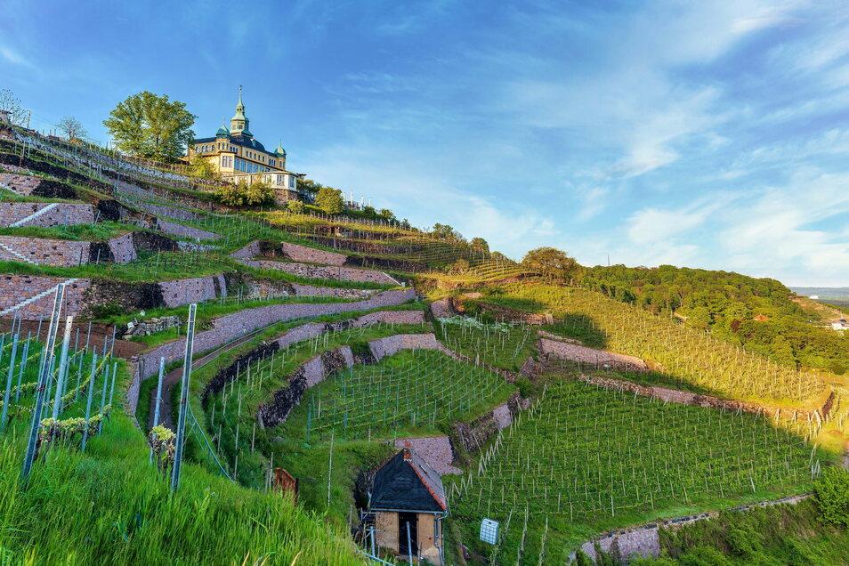Weit sichtbar und friedlich thront das Spitzhaus auf dem gleichnamigen Weinberg über der Stadt Radebeul.
