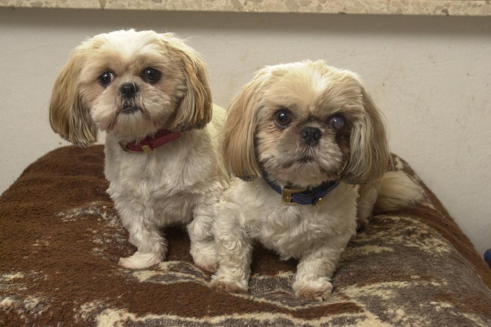 Auch diese süßen Hunde dürfen ab Mai auf den neuen Hundeauslaufplatz in Görlitz.