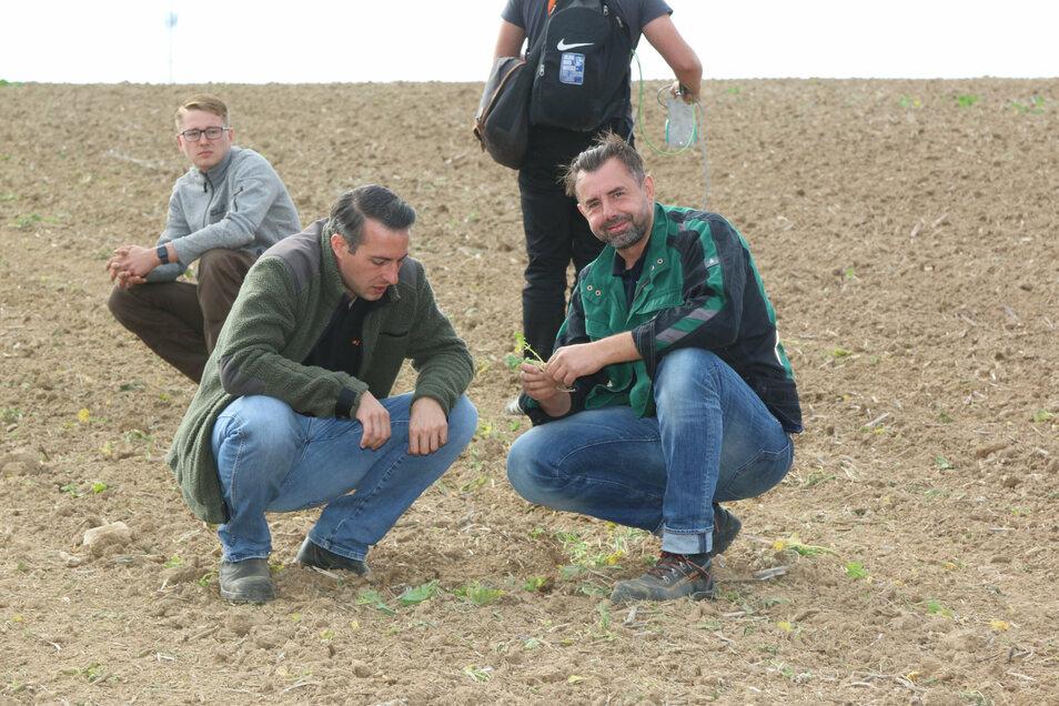 Daniel Kunzendorf (rechts) von der Südzucker AG Lüttewitz und Stephan Döbler, Verkaufsberater der Firma Agroplanta, begutachten den Boden, nachdem das Saatgut eingebracht ist.