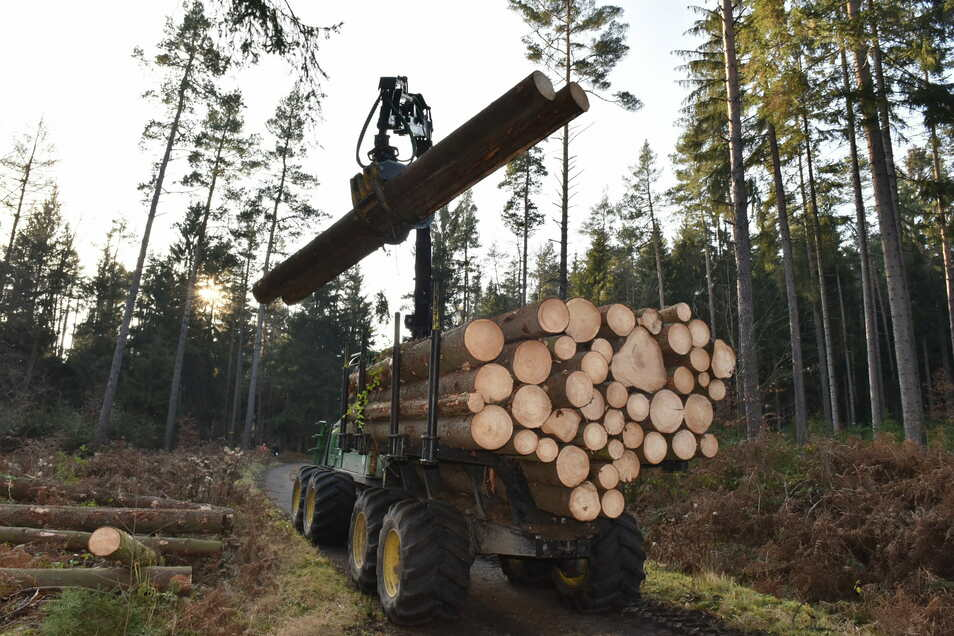 Sachsenforst erntet wieder frisches Holz, hier nahe dem Cunnersdorfer Waldbad. Damit soll auch Platz für den Nachwuchs geschaffen werden.