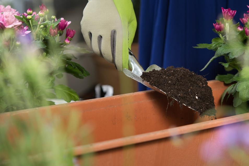 Viele Blumenerden sind besondere Mischungen, die Bedürfnisse bestimmter Pflanzen ansprechen.