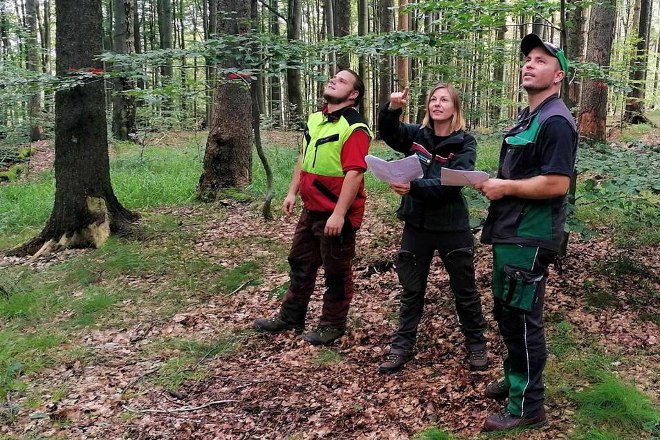 Catja Geyer (Mitte) ist neuen Leiterin des Nationalparkreviers Schmilka und koordiniert die Einsätze der Ranger.