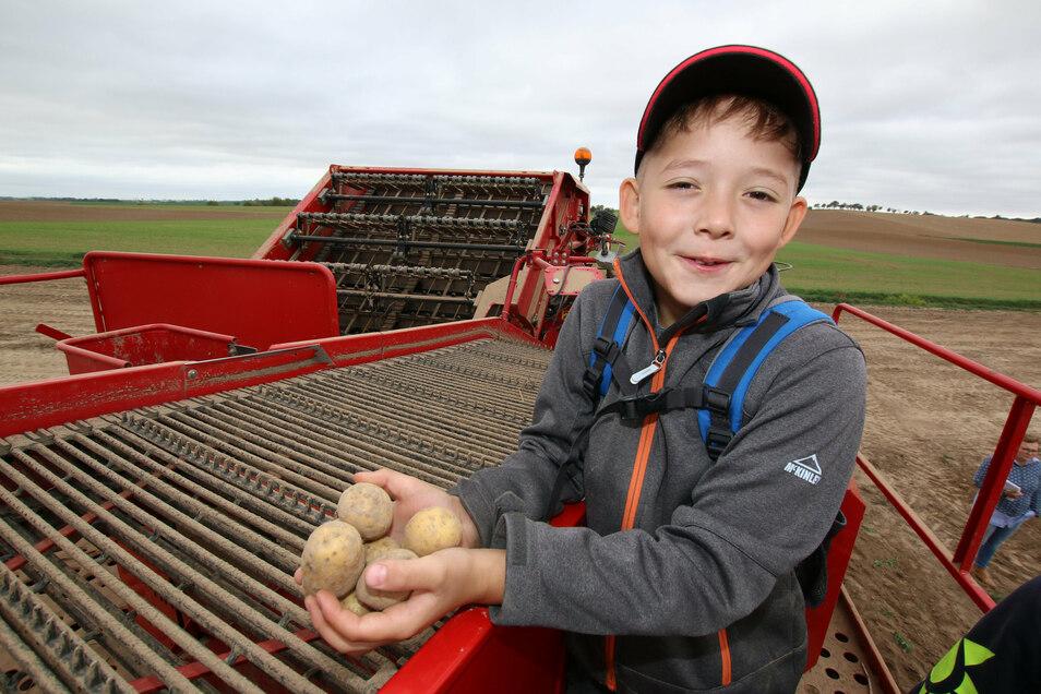 Ben besucht die dritte Klasse in der Ostrauer Grundschule. Am Donnerstag durfte er bei der Kartoffelernte der Agrar AG Ostrau dabei sein.