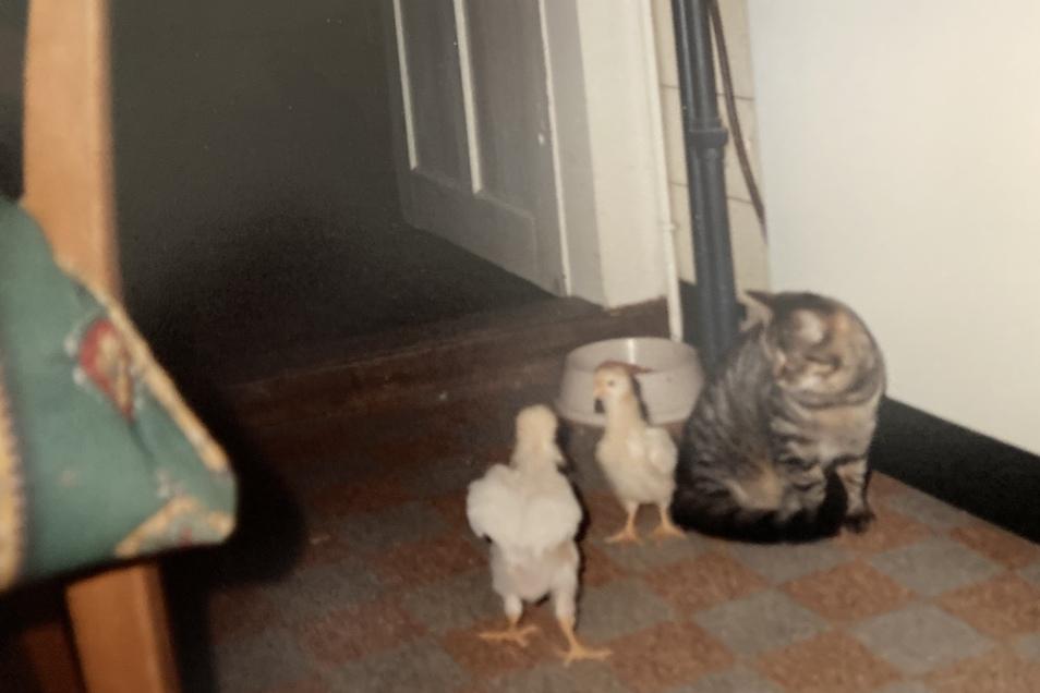 Auch kleine Küken haben vor den Katzen nichts zu befürchten.