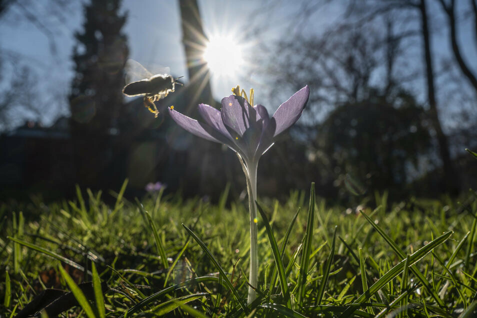 Mit 15 Grad ist es am 15. Januar in Freiburg so außergewöhnlich warm, dass es eher Frühling zu sein scheint.