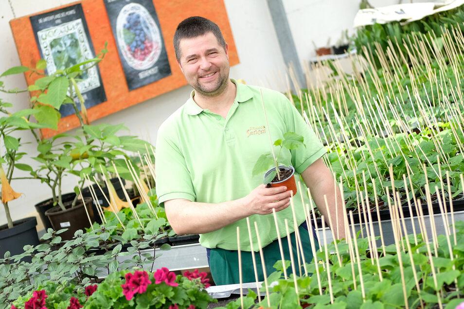 Alexander Bernhardt, Chef der gleichnamigen Meißener Gärtnerei, freut sich über den guten Start in die Gartensaison mit Blumen- und Gemüsepflanzen. Sorgen macht er sich über die künftige Zusammenarbeit mit Hotels und Gaststätten.
