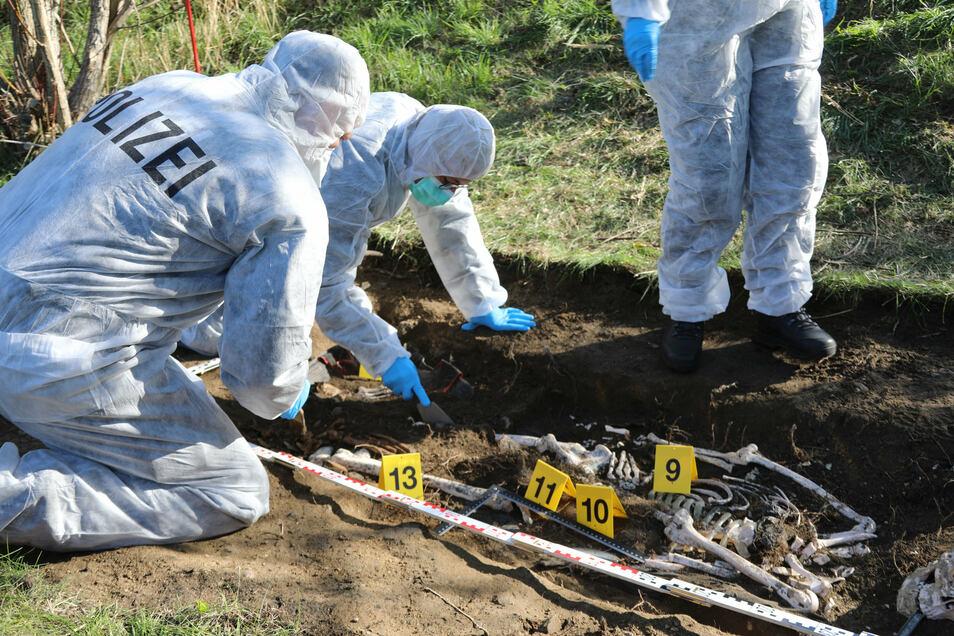 Bei einer gemeinsamen Übung zu einem fiktiven Mordfall arbeiten Kriminalisten und Archäologen bei einer Ausgrabung eines Plastikskeletts.