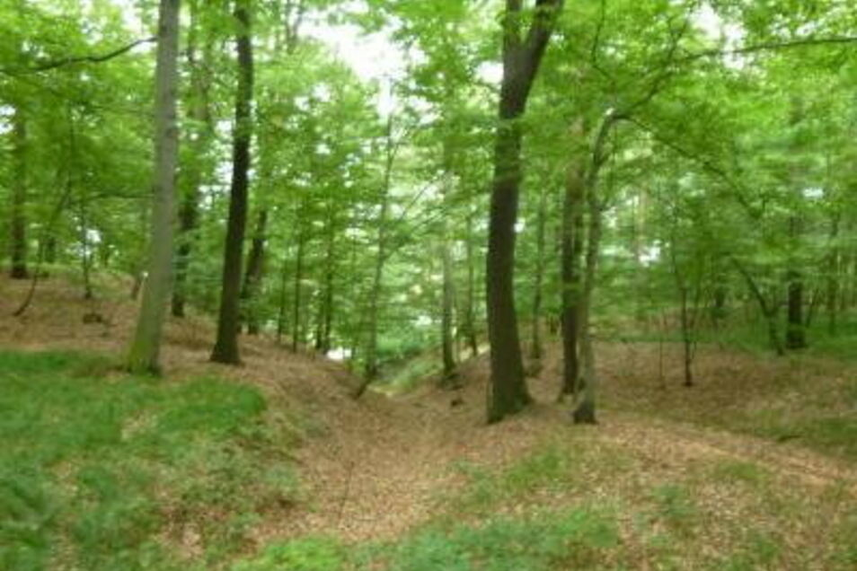 Im Park Neuhirschstein mussten etliche Bäume wegen der lang andauernden Trockenheit weichen.