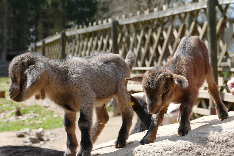 Im Sonnenlandpark gibt es viel tierischen Nachwuchs.