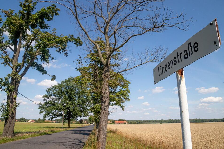 Die Bäume in der Lindenstraße zwischen Kreba und Tschernske haben durch die trockenen Jahre Schaden genommen. Nun sollen neue gepflanzt werden.